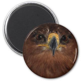 Ojos y cabeza de Eagle Imán Redondo 5 Cm