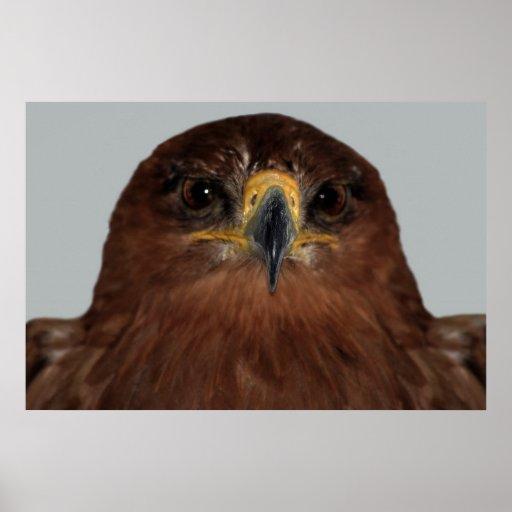 Ojos y cabeza de Eagle Póster