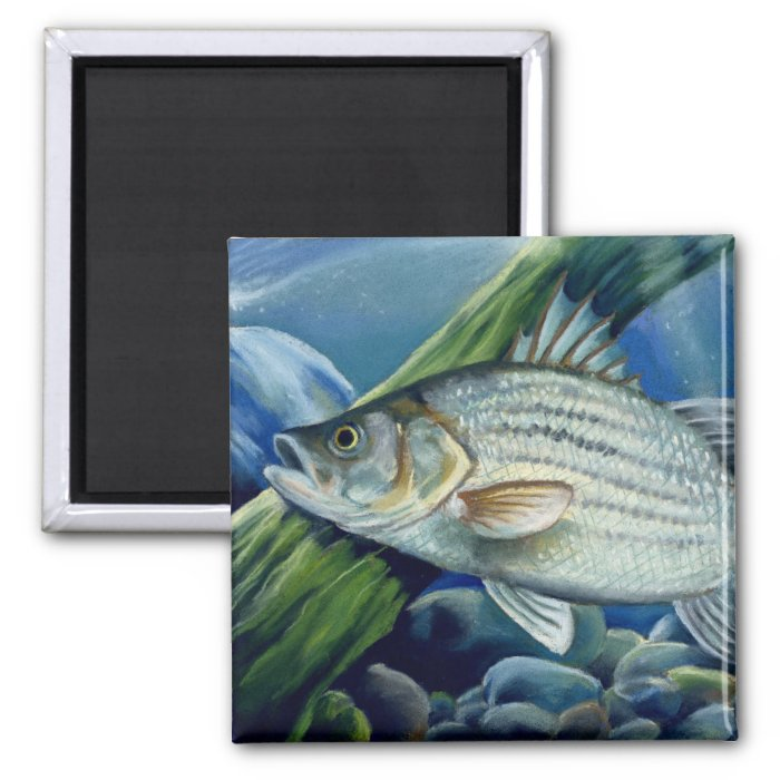 OK 2008 Bowles 1036 high 2 Inch Square Magnet
