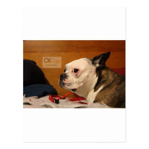 OK_THEN Boston Terrier Postales