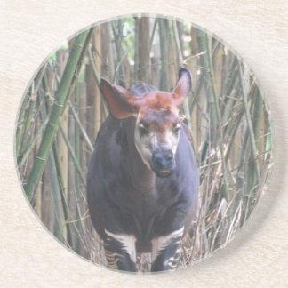 Okapi  Coaster