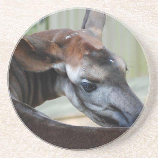Okapi Itch Coaster