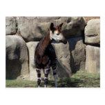 okapi postales