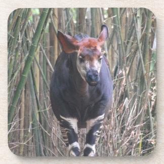 Okapi Set of Six Coasters