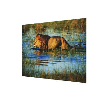 Okavango Delta, Botswana 3 Canvas Print