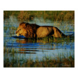 Okavango Delta, Botswana 3 Poster