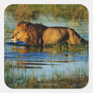 Okavango Delta, Botswana 3 Square Sticker