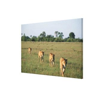 Okavango Delta, Botswana 4 Canvas Prints