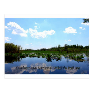 Okefenokee National Wildlife Refuge Postcard