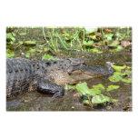 Okefenokee Swamp Park Alligator Photo Print
