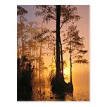 Okefenokee Swamp Postcard