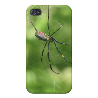Okinawa Spider iPhone 4 Cases