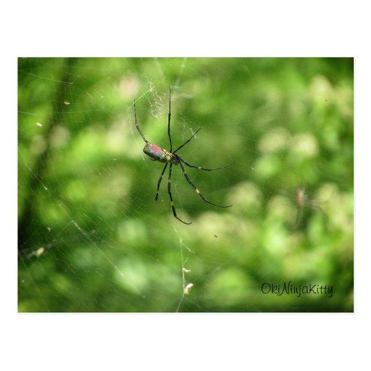 Okinawa Spider Postcard