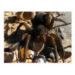 Oklahoma, araña postales