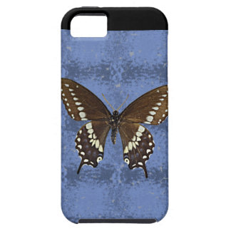 Oklahoma Black Swallowtail Butterfly iPhone SE/5/5s Case