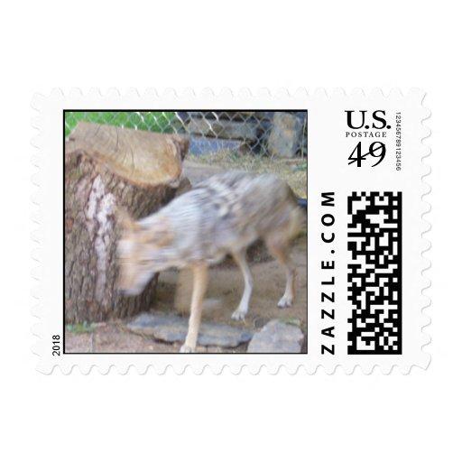 Oklahoma Coyote Postage Stamps