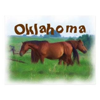 Oklahoma horses 2 postcards