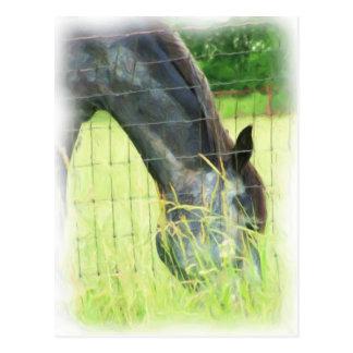 Oklahoma Horses 3 Postcards