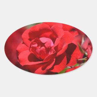 Oklahoma Rose Oval Sticker