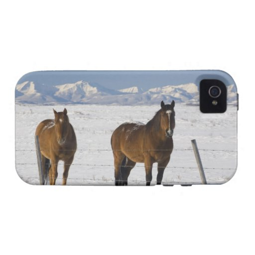 okotoks, Alberta, Canadá Carcasa Vibe iPhone 4