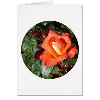 Oktoberfest Grandiflora Card