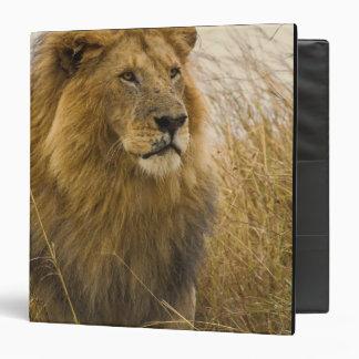 Old adult black maned Lion, Masai Mara Game 3 Ring Binder