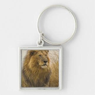 Old adult black maned Lion, Masai Mara Game Keychains