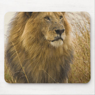 Old adult black maned Lion, Masai Mara Game Mouse Pad