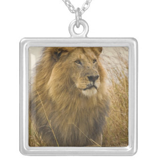 Old adult black maned Lion, Masai Mara Game Silver Plated Necklace