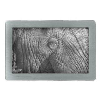 Old African Elephant Belt Buckle