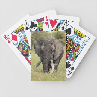 Old African elephant bull - broken tusk (Africa) Bicycle Playing Cards
