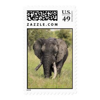 Old African elephant bull - broken tusk (Africa) Postage Stamp