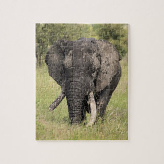 Old African elephant bull - broken tusk (Africa) Puzzle