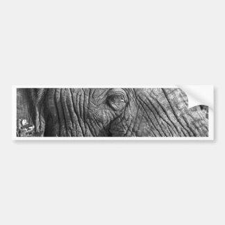 Old African Elephant Bumper Sticker