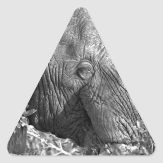 Old African Elephant Triangle Sticker