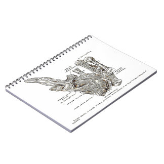 Old anatomy drawing Muscles of the Thumb sepia Spiral Notebook