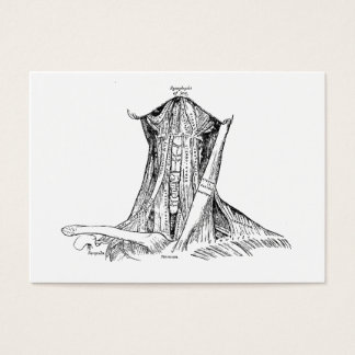 Old Anatomy Illustration Muscles Of The Neck Business Card