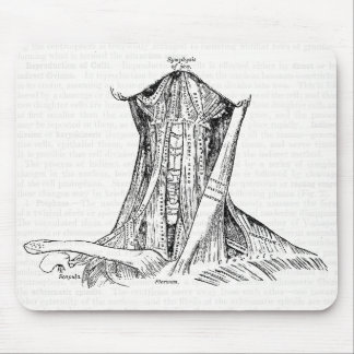 Old Anatomy Illustration Muscles Of The Neck Mouse Pad