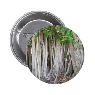 Old ancient ficus tree roots background picture pins