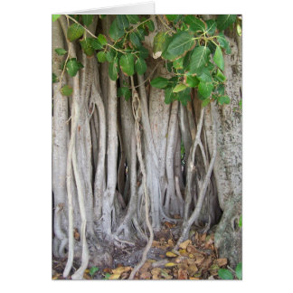 Old ancient ficus tree roots background picture greeting card