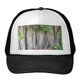 Old ancient ficus tree roots background picture trucker hat