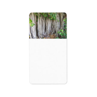 Old ancient ficus tree roots background picture custom address labels