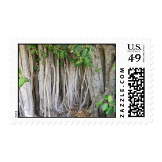 Old ancient ficus tree roots background picture postage stamps