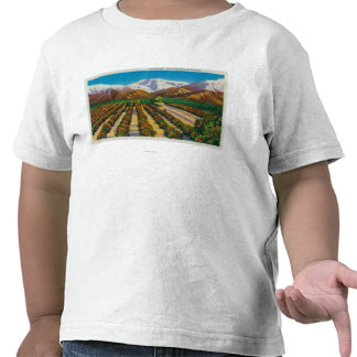 Old Baldy Mountain from the Orange Groves Shirts