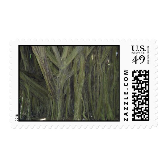 Old Banyan Tree Stamps