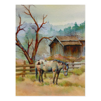 OLD BARN & APPALOOSA by SHARON SHARPE Postcard