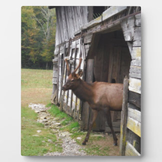 Old Barn, Elk with Velvet Antlers Plaque