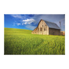 Old Barn in Field of Spring Wheat Canvas Print
