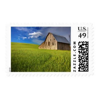 Old Barn in Field of Spring Wheat Postage