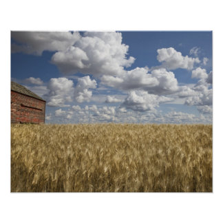 Old Barn in Wheat Field 2 Print